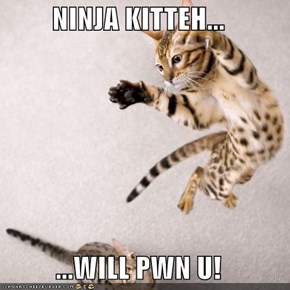 NINJA KITTEH...  ...WILL PWN U!