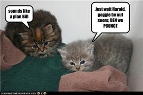 Just wait Harold, goggie be out soonz, DEN we POUNCE