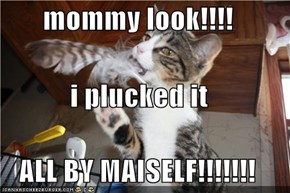 mommy look!!!! i plucked it ALL BY MAISELF!!!!!!!