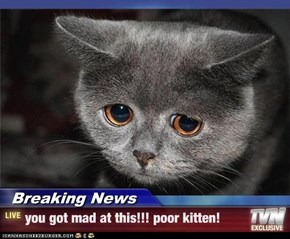 Breaking News - you got mad at this!!! poor kitten!