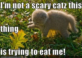I'm not a scary catz this thing is trying to eat me!