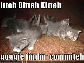 Itteh Bitteh Kitteh  goggie findin' commiteh