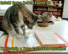 Quick! Come Here! I Found It!  The Catnip & Tuna Casserole Receipe!