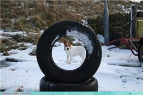 'Haggis' in the Snow!