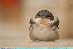 Serious bird is serious!
