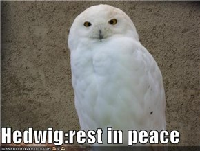 Hedwig:rest in peace