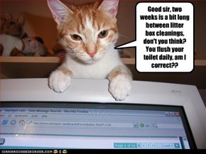 Good sir, two weeks is a bit long between litter  box cleanings,  don't you think?  You flush your toilet daily, am I correct??