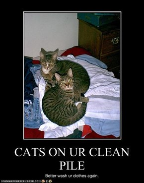 CATS ON UR CLEAN PILE