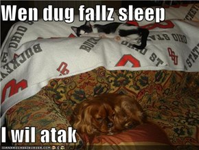 Wen dug fallz sleep  I wil atak