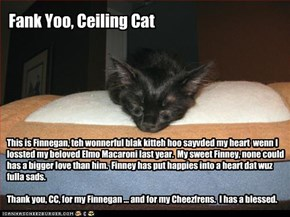 Blak Kittehs, Reskyooers of Hearts