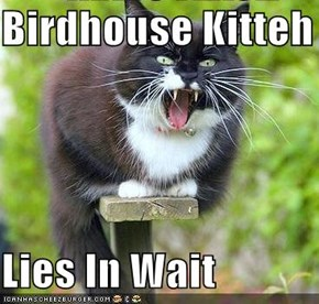Birdhouse Kitteh  Lies In Wait