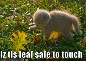 iz tis leaf safe to touch
