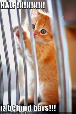 HALP!!!!!!!!!!!!  iz behind bars!!!