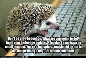 Don't be silly, hedgehog. What are you going to do? Email your hedgehog buddies? You don't even have an email account. You're a hedgehog. You should be out in the hedge, being a hog. Get off that computer.