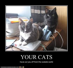 YOUR CATS