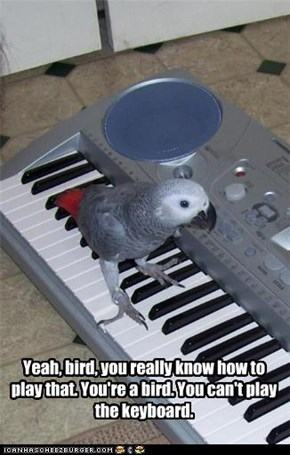 Yeah, bird, you really know how to play that. You're a bird. You can't play the keyboard.