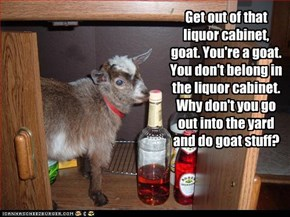 Get out of that liquor cabinet, goat. You're a goat. You don't belong in the liquor cabinet. Why don't you go out into the yard and do goat stuff?