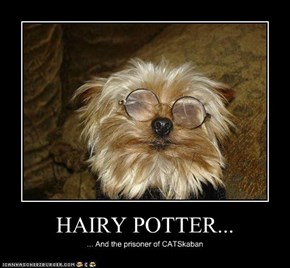 HAIRY POTTER...