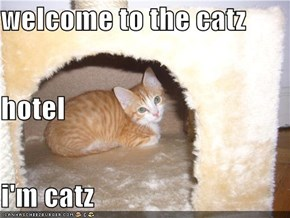 welcome to the catz  hotel i'm catz