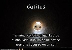 Oh noes...nawt Catitus!!!