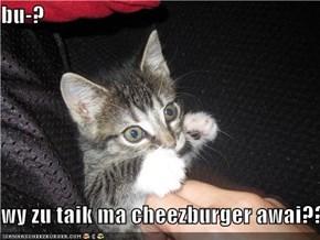 bu-?    wy zu taik ma cheezburger awai???