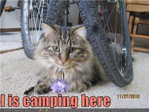 I is camping here