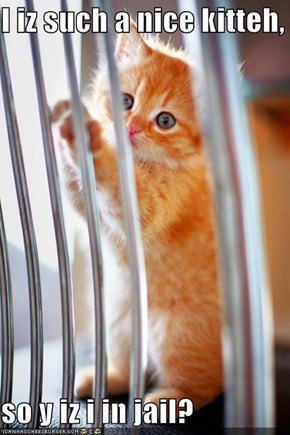 I iz such a nice kitteh,  so y iz i in jail?