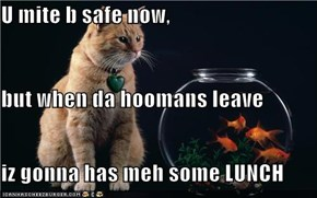 U mite b safe now,  but when da hoomans leave iz gonna has meh some LUNCH