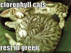 clorophyll cats  rest in green