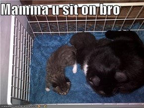 Mamma u sit on bro