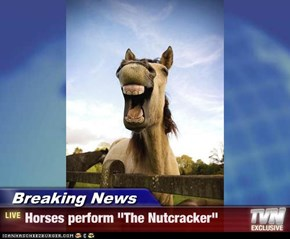 "Breaking News - Horses perform ""The Nutcracker"""
