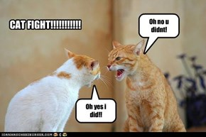CAT FIGHT!!!!!!!!!!!