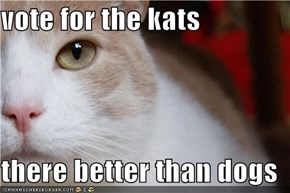 vote for the kats  there better than dogs