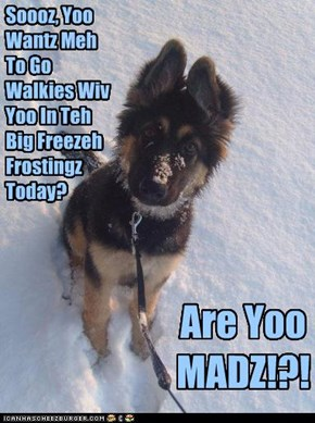 Soooz, Yoo Wantz Meh To Go Walkies Wiv Yoo In Teh Big Freezeh Frostingz Today?