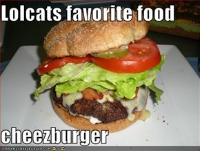Lolcats favorite food  cheezburger