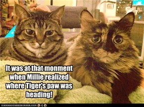 It was at that monment when Millie realized where Tiger's paw was heading!