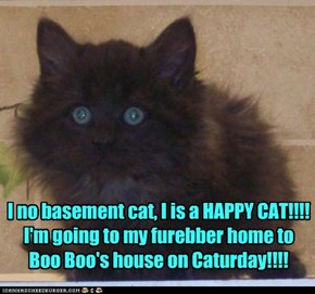 I no basement cat, I is a HAPPY CAT!!!!  I'm going to my furebber home to  Boo Boo's house on Caturday!!!!