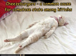 Cheezeburgers - a common cause for comatose state among kittehs