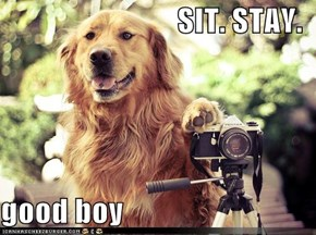 SIT. STAY.  good boy