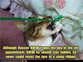 Although  Roscoe  KNEW  it  was  the  day  of  the  vet  appointment,  KNEW  he  should  stay  hidden,  he  never  could  resist  the  lure  of  a  shiny  ribbon.