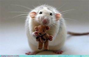 Everyone Needs a Teddy