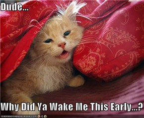 Dude...  Why Did Ya Wake Me This Early...?