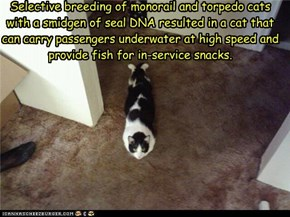 Selective breeding of monorail and torpedo cats with a smidgen of seal DNA resulted in a cat that can carry passengers underwater at high speed and provide fish for in-service snacks.