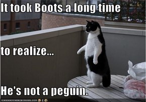 It took Boots a long time to realize... He's not a peguin.