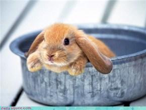 Bunday: Easy Bake Bunny