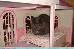 Kitteh in Barbie's House