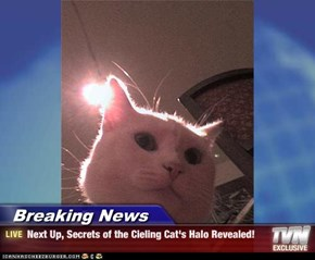 Breaking News - Next Up, Secrets of the Cieling Cat's Halo Revealed!