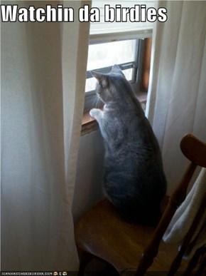 Watchin da birdies