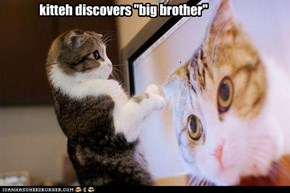 "kitteh discovers ""big brother"""
