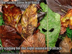 The rarely seen leaf Ninja  Is waiting for the right moment to attack